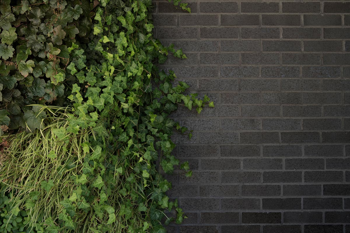 Black Brick and Ivy Architectural Detail